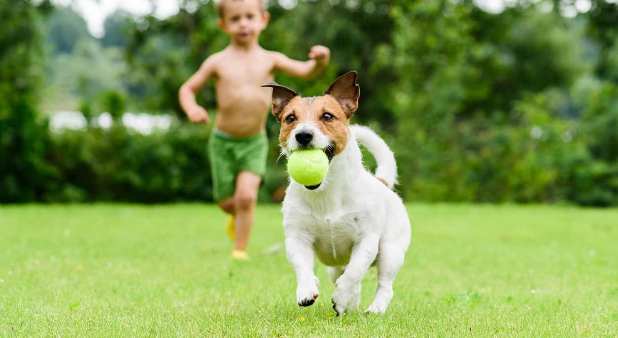 dog ball launchers
