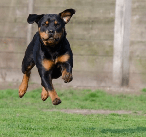 The best dog treadmills to get your dog super fit 1