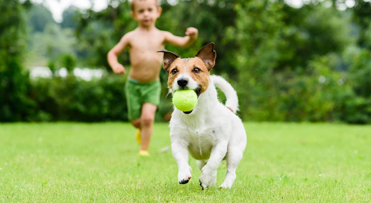 Best Tennis Ball Launchers for Dogs