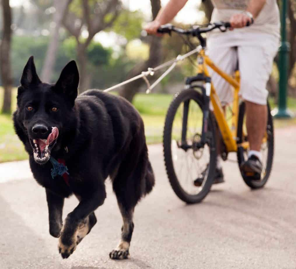 How to Easily Exercise Your Dog When You Go Out, Besides Going for a Walk 1