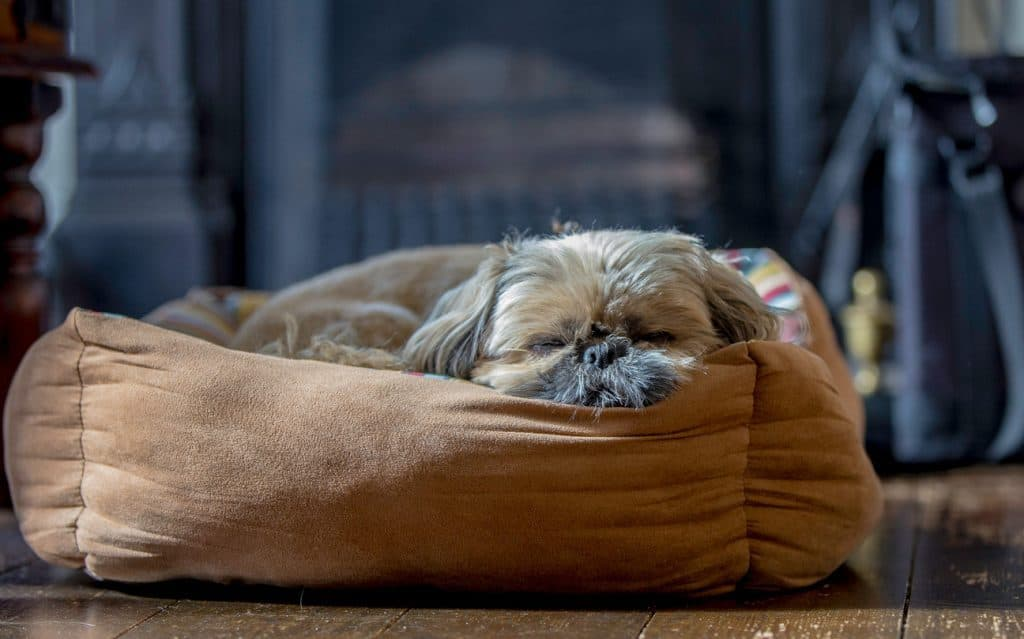 How do you keep your dog safe and warm during the winter months? 4