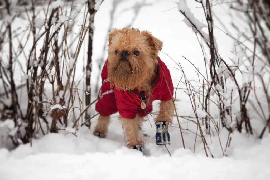 How do you keep your dog safe and warm during the winter months? 3