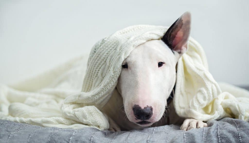 How do you keep your dog safe and warm during the winter months? 5