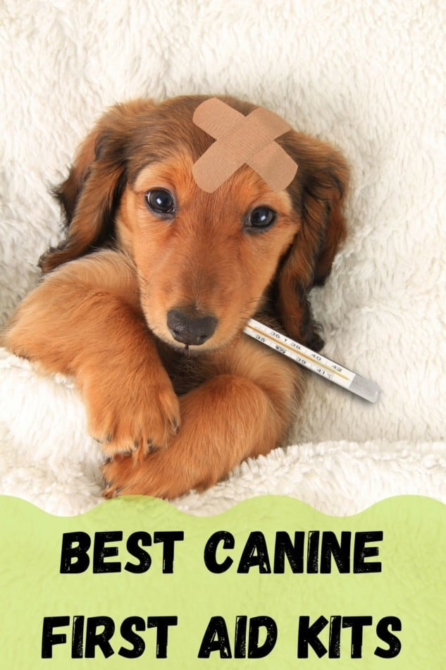 Canine First Aid Kits   Be Prepared!   Kits Under £25! 1