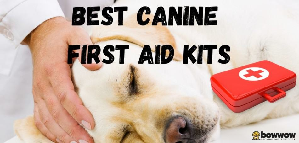 Canine First Aid.