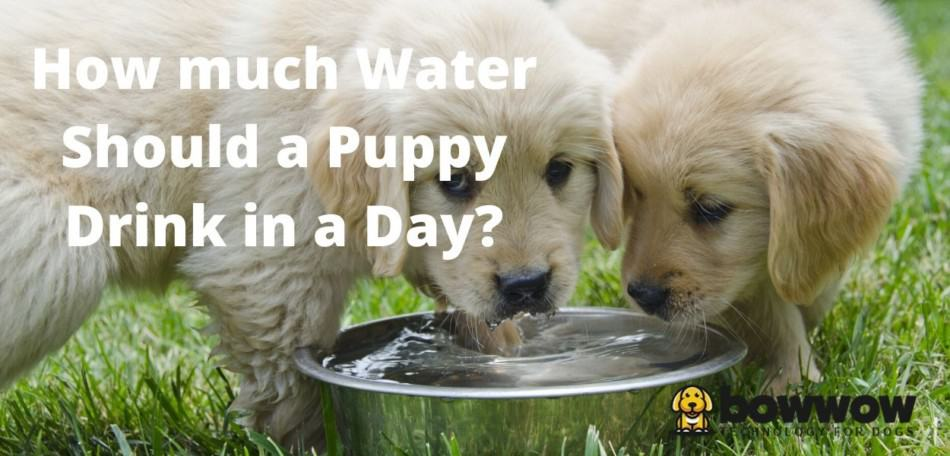 how much water should a puppy drink