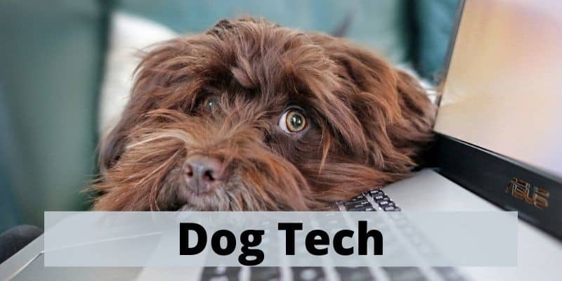 tech for dogs