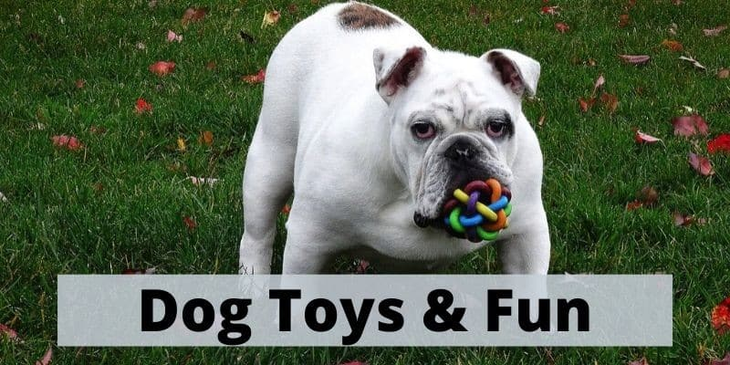 dog toys and leads