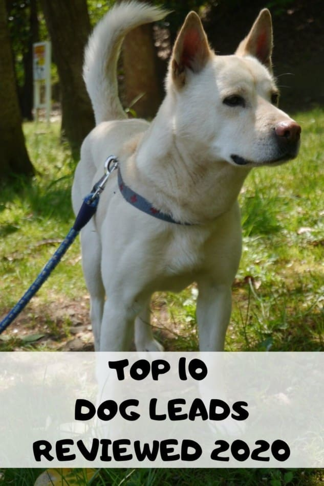 TOP 10 DOG LEAD REVIEW