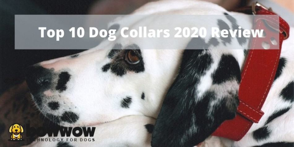 Top 10 Dog Collars | 2020 Updated Review 1