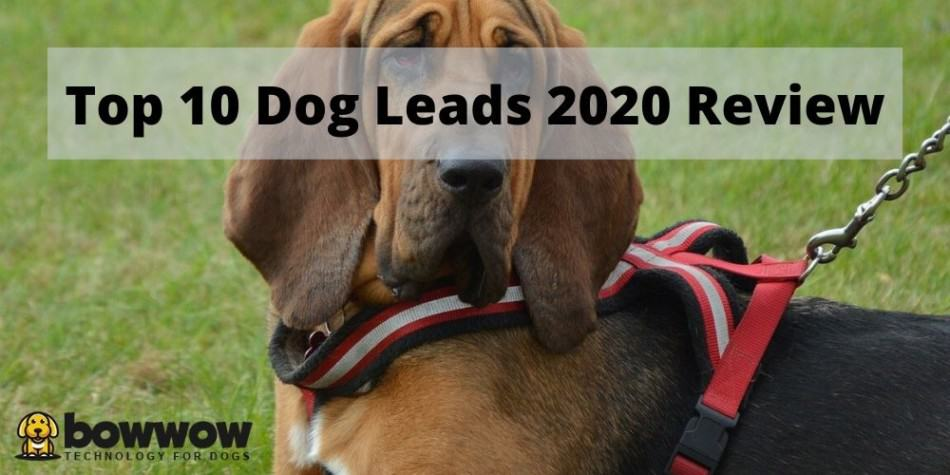 Top 10 Dog Leads | 2020 Updated Review 1