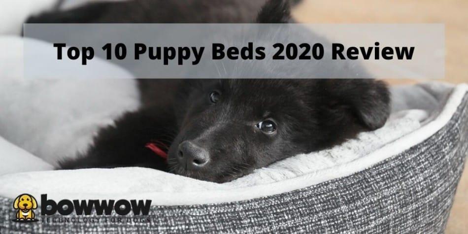 top 10 puppy beds