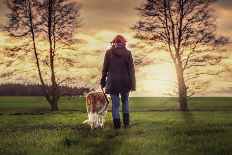 Top 10 Hi-Vis Solutions Walking Your Dog