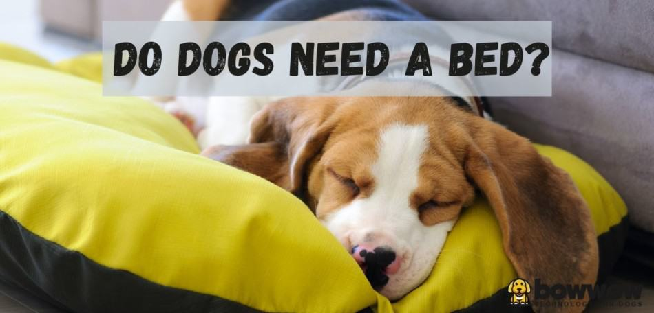 do dogs need a bed?
