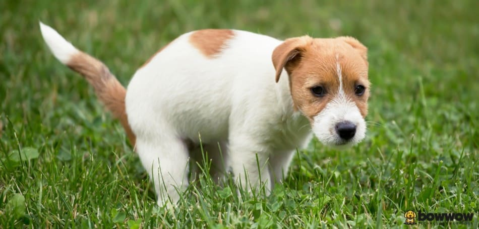 How Many Times a Day Should a Dog Poop?