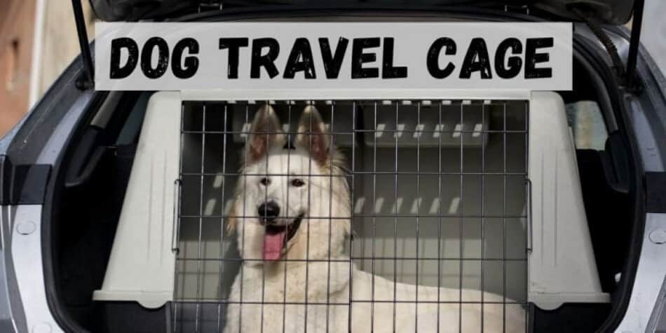 dog in a travel cage