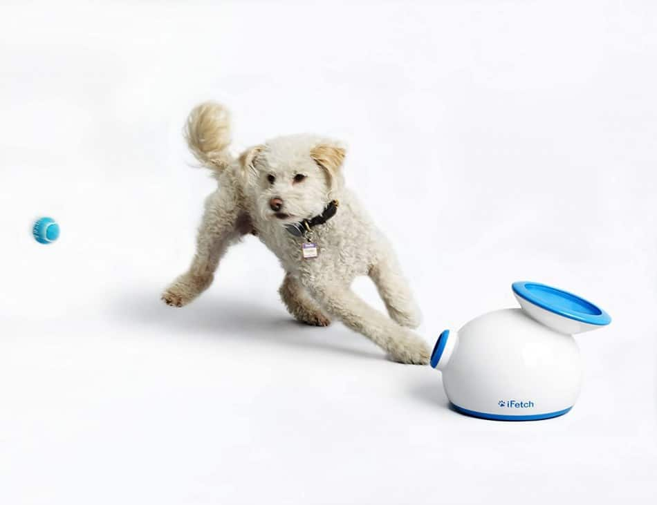 The Best Dog Ball Launchers to Exercise Your Dog 1