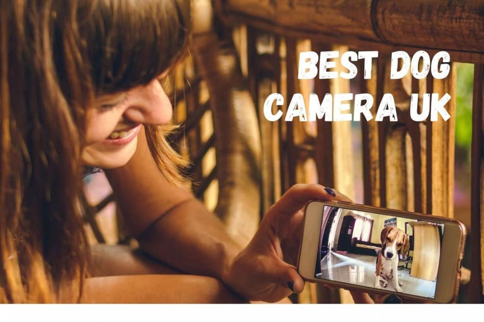 Best Dog Camera (UK)