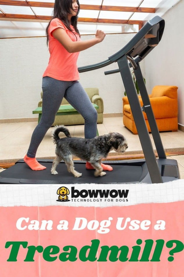 Can dogs use treadmills