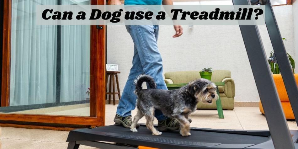 dog on a treadmill