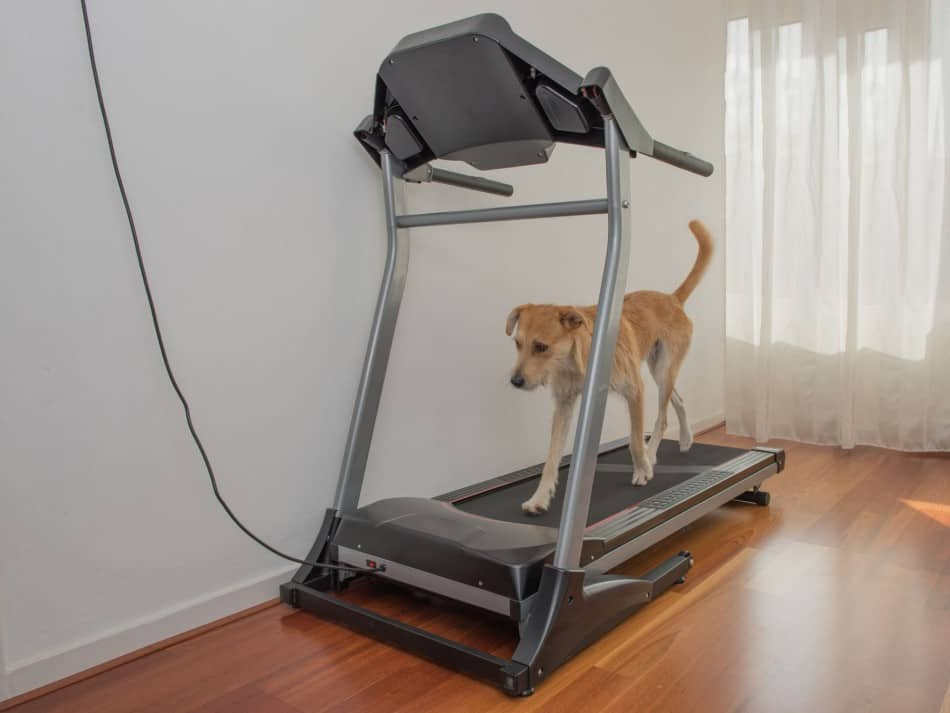 dog on a treadmill