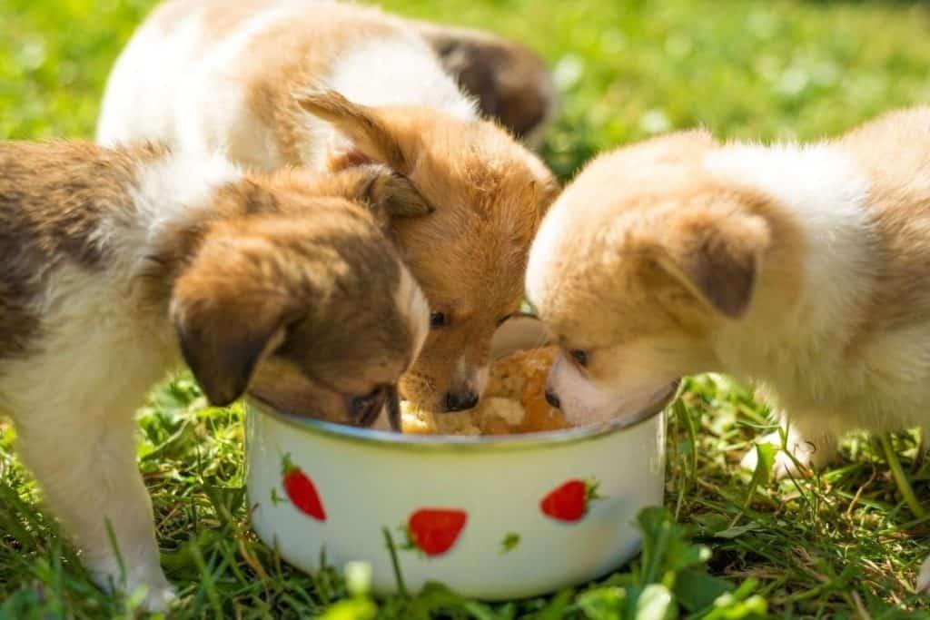 Can Dogs Eat Eggshells
